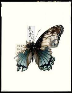 brokenbutterfly
